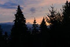 Kontur av barrträd mot en härlig solnedgång i Royaltyfri Bild