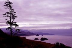 Kontur av barrträdet mot seacoasten Fotografering för Bildbyråer