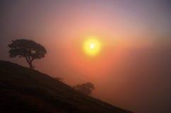 Kontur av bergen och trädet med solen Fotografering för Bildbyråer