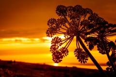 Kontur av blomman i en guld- solnedgång royaltyfria bilder