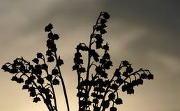 Kontur av blommor på solnedgången Arkivfoton