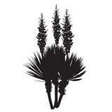 Kontur av den blomstra palmliljaväxten Royaltyfri Fotografi
