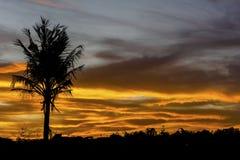Kontur av den enkla kokospalmen på molnig solnedgång fotografering för bildbyråer