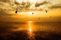 Kontur av den militära helikopterflyttningen in i himmel på solnedgången Fotografering för Bildbyråer