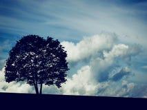 Kontur av det Adler trädet med moln på bakgrund Arkivfoton