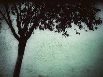 Kontur av det döda trädet Fotografering för Bildbyråer