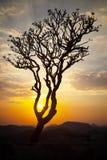 Kontur av det döda trädet arkivfoto
