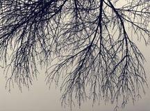 Kontur av det döda trädet Royaltyfri Foto