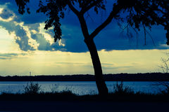 Kontur av det enkla trädet på solnedgången royaltyfria bilder
