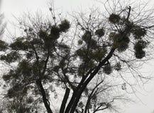 Kontur av det kalla unika trädet mot himlen royaltyfria bilder