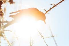 Kontur av en fågel på en solig dag för vinter Fotografering för Bildbyråer