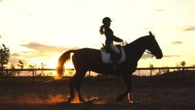 Kontur av en flicka som rider en häst på solnedgången arkivfilmer