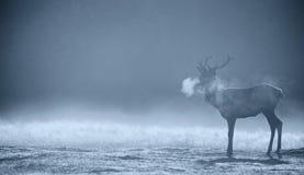 Kontur av en fullvuxen hankronhjort för röda hjortar royaltyfri fotografi