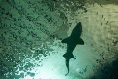 Kontur av en haj Royaltyfri Bild