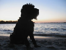 Kontur av en hund på stranden på solnedgången royaltyfri fotografi