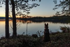 Kontur av en hund som sitter på kusten av en skogsjö royaltyfri fotografi