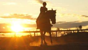 Kontur av en kvinna som rider en häst på solnedgången arkivfilmer