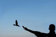 Kontur av en man som matar en seagull med ett kex Arkivfoto