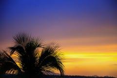 Kontur av en palmträd framme av en orange och purpurfärgad sunse arkivbild