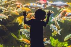 Kontur av en pojke som ser fisken i akvariet arkivfoton