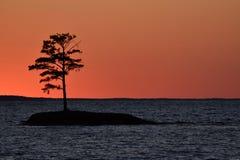 Kontur av en trädö på sjösolnedgång Arkivbild