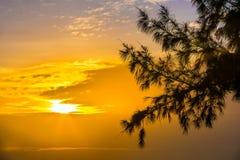 Kontur av en trädfilial på solnedgång Hainan Kina Royaltyfri Foto