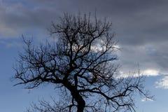 Kontur av ett naket träd i tidig vår royaltyfria foton