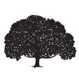 Kontur av ett stort träd med lövverk Royaltyfri Bild