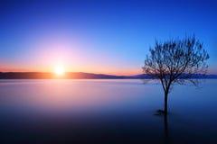 Kontur av ett träd i Ohrid sjön, Makedonien på solnedgången Arkivbilder