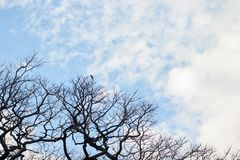 Kontur av ett träd med en blå himmel royaltyfri fotografi