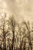 Kontur av ett träd mot en himmel royaltyfria bilder