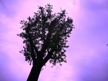 Kontur av ett träd på purpurfärgad och rosa bakgrund Royaltyfri Bild