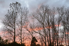 Kontur av ett träd mot solnedgången Arkivbild