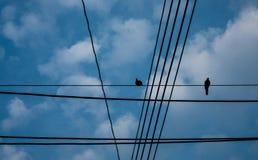 Kontur av fåglar med tråd på elektrisk pol royaltyfria foton