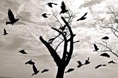 Kontur av fåglar som flyger runt om ett träd arkivbild