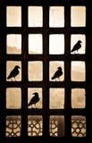 Kontur av fyra fåglar som gör ett fästingtecken på ett patternlike fönster i Indien royaltyfri foto