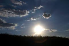 Kontur av gräset i solen Royaltyfri Fotografi