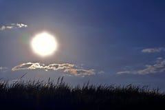 Kontur av gräset i solen Royaltyfri Foto