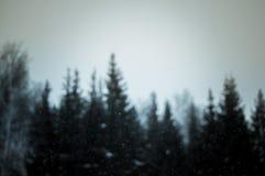 Kontur av granträd med fallande snöflingor Royaltyfri Foto