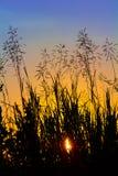 Kontur av gräs på solnedgången mot aftonhimlen Fotografering för Bildbyråer