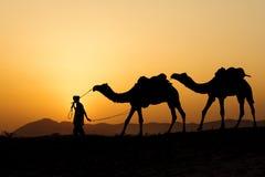 Kontur av kamelaffärsmannen som korsar sanddyn Arkivbilder