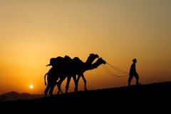 Kontur av kamelaffärsmannen som korsar sanddyn Arkivfoton