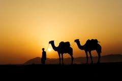Kontur av kamelaffärsmannen som korsar sanddyn under solen Royaltyfri Foto