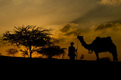 Kontur av kamelaffärsmannen som korsar sanddyn under solen Arkivbilder
