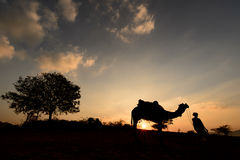 Kontur av kamelaffärsmannen som korsar sanddyn under solnedgång Arkivfoto