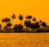 Kontur av kokosnötpalmträd på den guld- vändkretssolnedgången Royaltyfri Fotografi