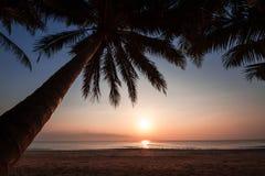 Kontur av kokospalmlutningen ner till stranden på soluppgångbakgrund, Chumporn landskap Arkivfoto