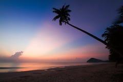 Kontur av kokospalmlutningen ner till stranden på soluppgångbakgrund, Chumporn landskap Royaltyfri Bild