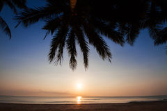 Kontur av kokospalmlutningen ner till stranden på soluppgångbakgrund, Chumporn landskap Royaltyfri Fotografi