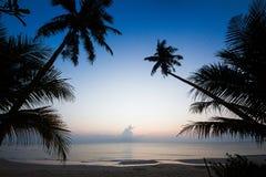 Kontur av kokospalmlutningen ner till stranden på soluppgånglodisar Royaltyfri Foto